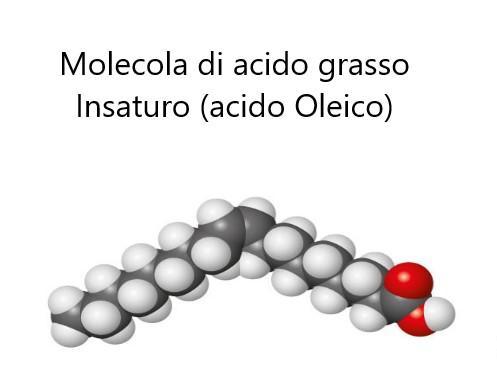 Acido Oleico: una molecola dalle proprietà straordinarie