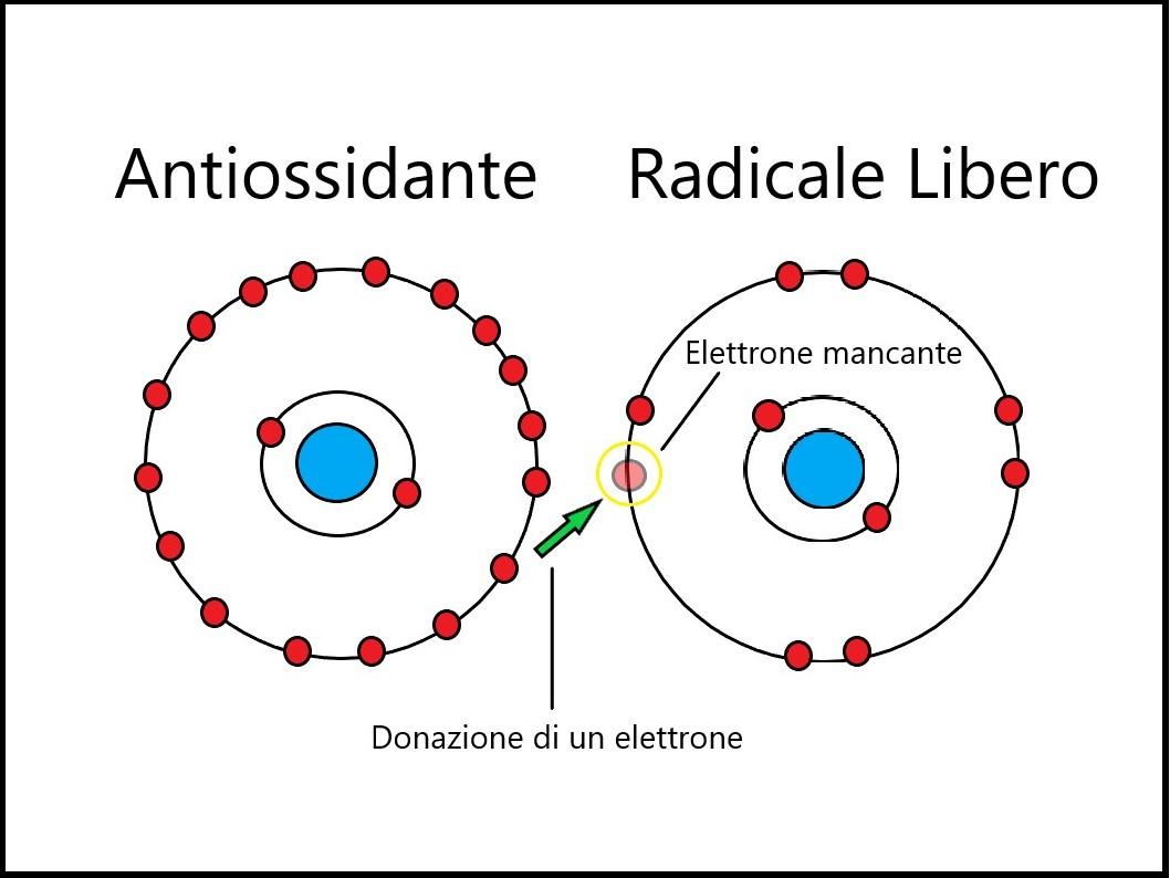 L'azione dei Polifenoli dell'Extravergine neutralizza i Radicali Liberi