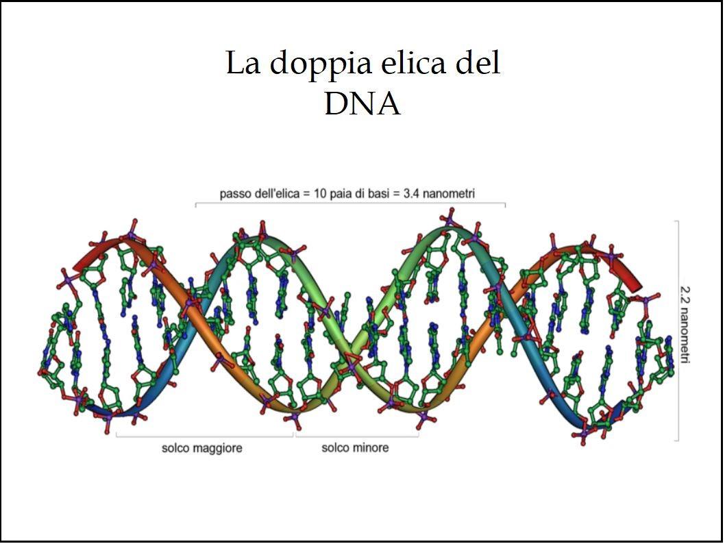 I Polifenoli dell'Extravergine di Oliva Proteggono il DNA