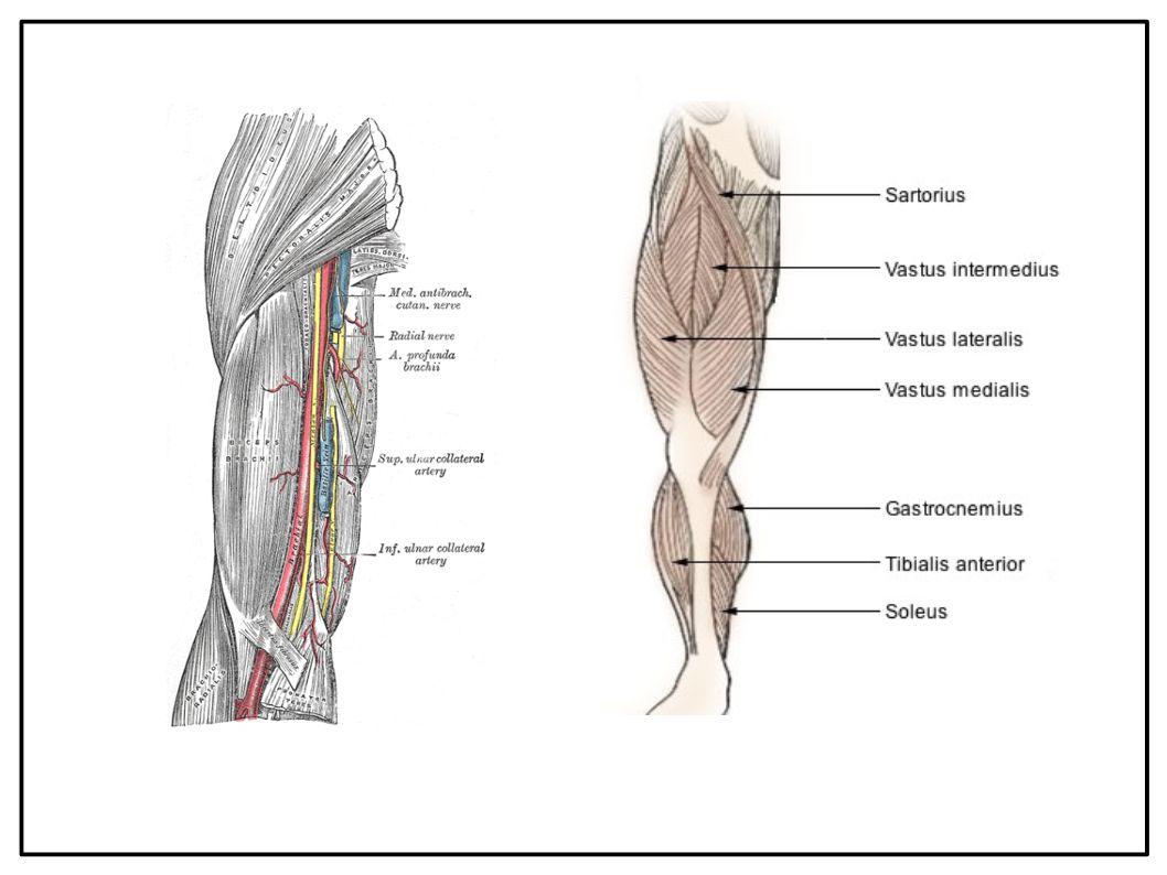 L'Extravergine contrasta i sintomi della Sclerosi Laterale Amiotrofica
