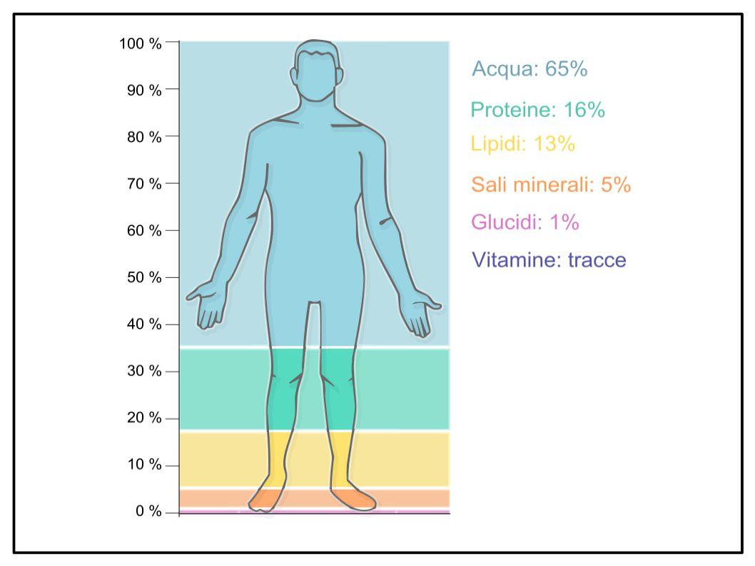 Gli italiani vivono più a lungo grazie ai grassi buoni