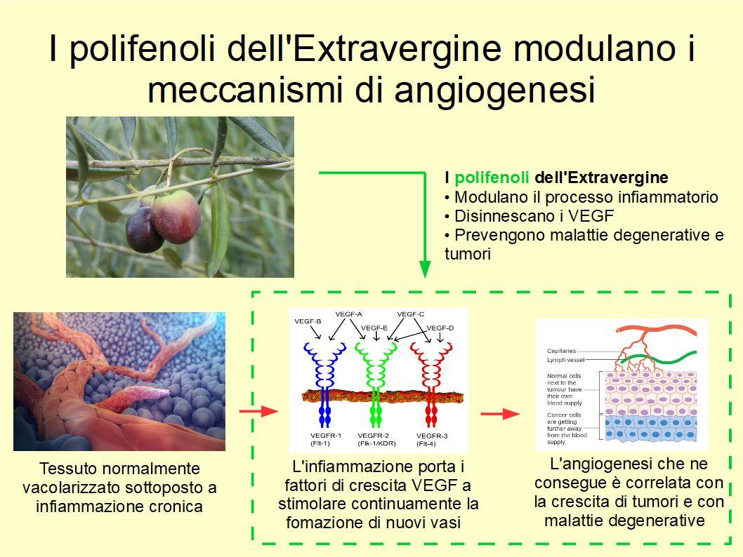 I polifenoli dell'Extravergine ostacolano la genesi delle malattie degenerative