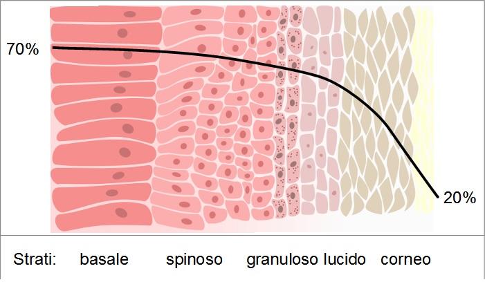 Applicare Extravergine sulla pelle dopo l'esposizione solare ne riduce i danni